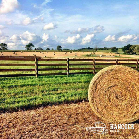 Tifton 44 Bermuda Horse or Cow Hay
