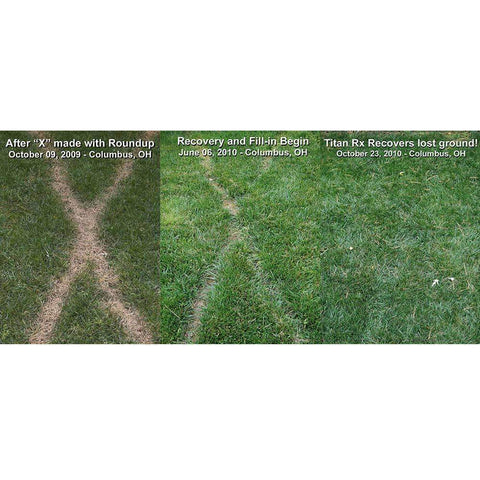 Titan RX Turf Type Tall Fescue Grass Seed