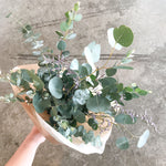 Freshen Up! Eucalyptus Bundle