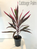 "6"" Tropical Houseplants"