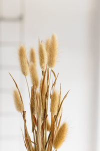 Dried Short Bunny Tails, Natural