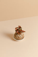Fittonia Mini Kokedama