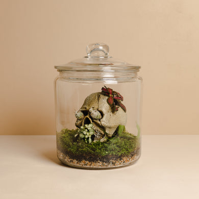 Terrarium Skull Assortment (Large Vessel)