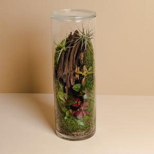 Terrarium Plant Assortment (Large Vessel)