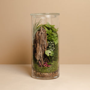 Terrarium Plant Assortment (Medium Vessel)