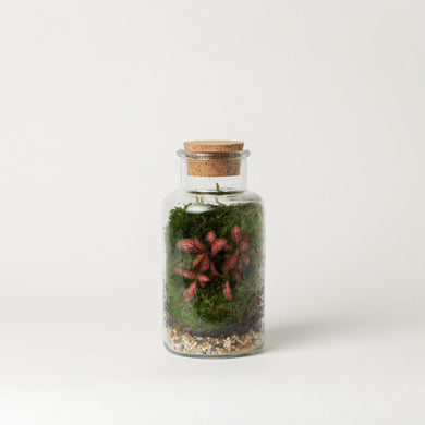 mini terrarium plant shop