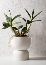 Raw Earth Plant Stand Pot (240mm Pot Size)