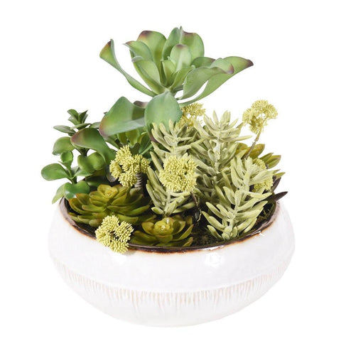 Greenhouse Succulent Arrangement - Bloomr