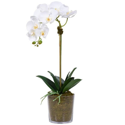 SINGLE STEM ORCHID ARRANGEMENT