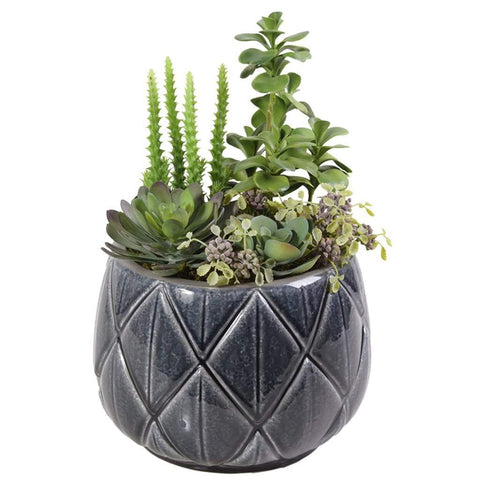 Shop for this premium Seaside Succulent Arrangement.  | Bloomr