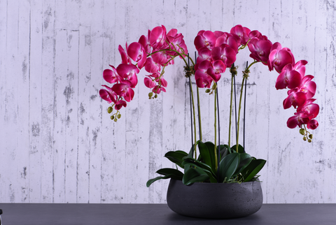 Bloomr Oasis Orchid | Luxury Faux Orchids