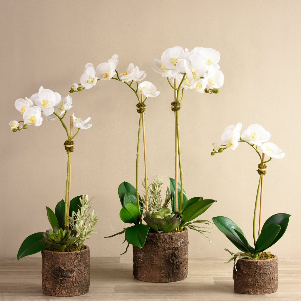 Artificial Big Sur Orchid Arrangement, Faux Big Sur Orchid Arrangement, Fake Big Sur Orchid Arrangement  - Bloomr