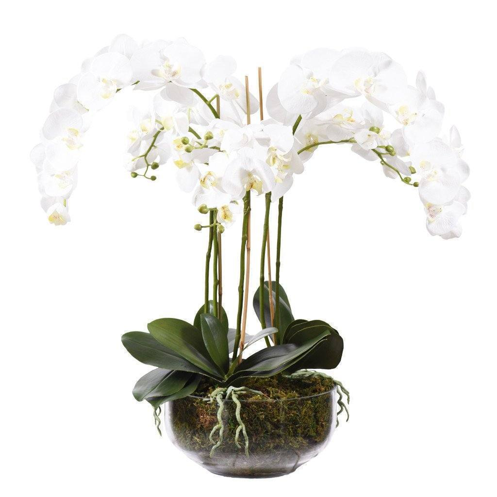 Artificial Classic Orchid Arrangement, Faux Classic Orchid Arrangement, Fake Classic Orchid Arrangement  - Bloomr
