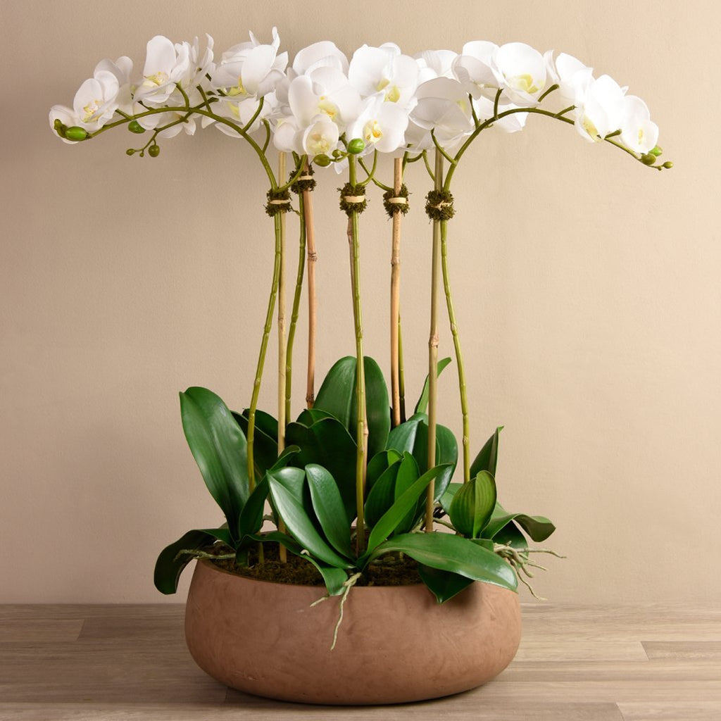 Bloomr Flowers Large / Brown Concrete / White Oasis Orchid Arrangement artificial flowers artificial trees artificial plants faux florals