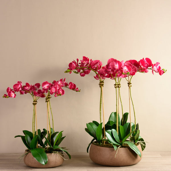 Bloomr Flowers Medium / Brown Concrete / magenta Oasis Orchid Arrangement artificial flowers artificial trees artificial plants faux florals