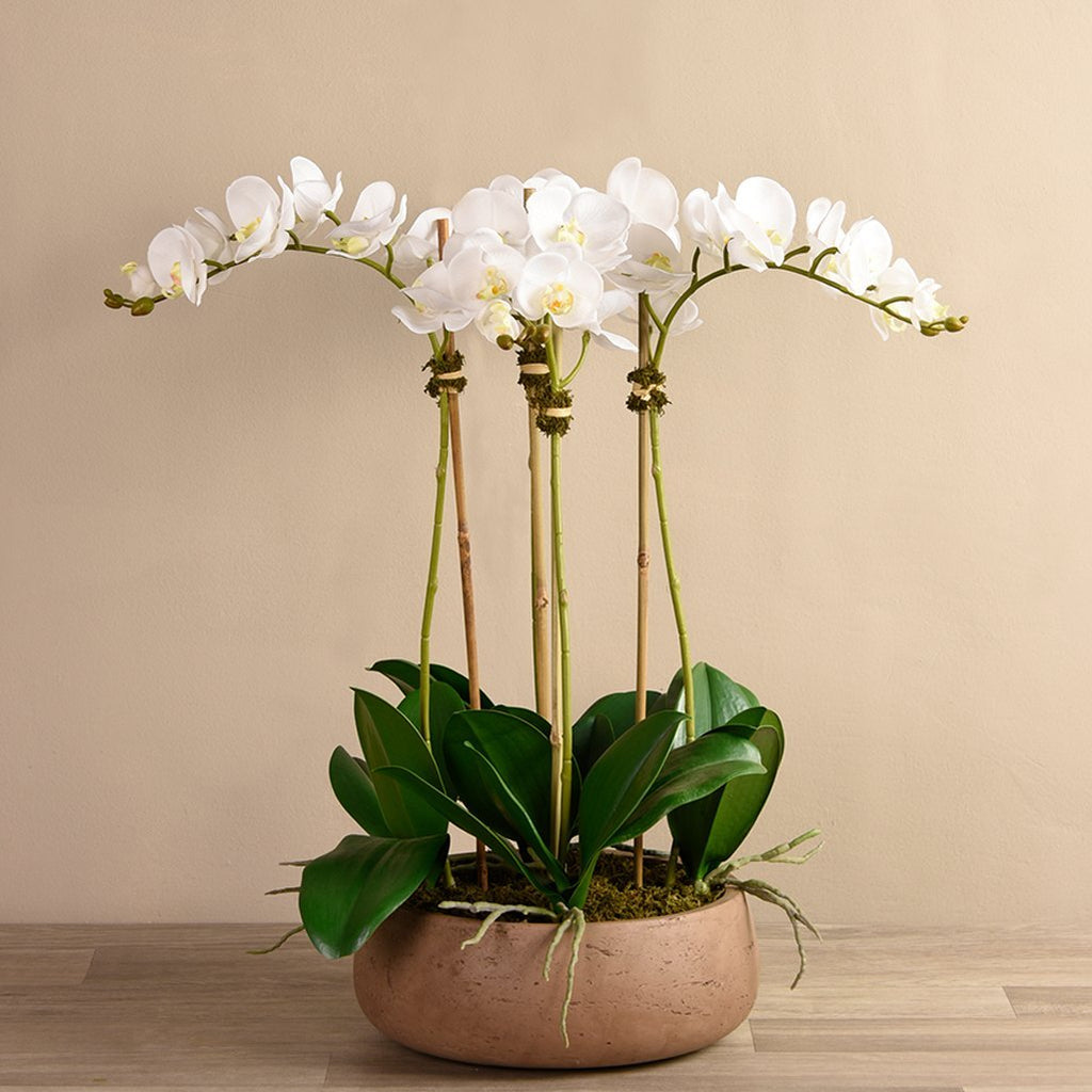 Bloomr Flowers Medium / Brown Concrete / White Oasis Orchid Arrangement artificial flowers artificial trees artificial plants faux florals