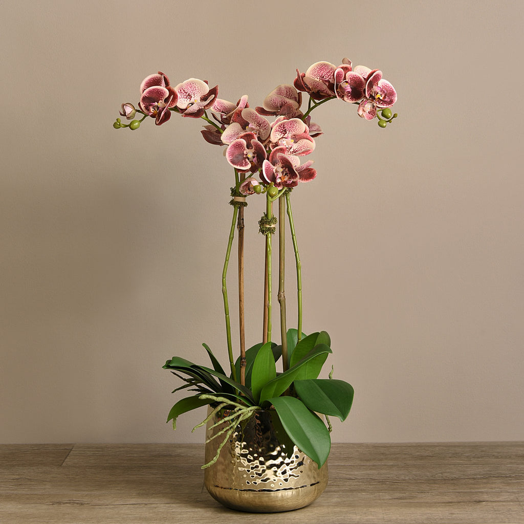 Bloomr Flowers Medium / Maroon Parisian Orchid Arrangement artificial flowers artificial trees artificial plants faux florals
