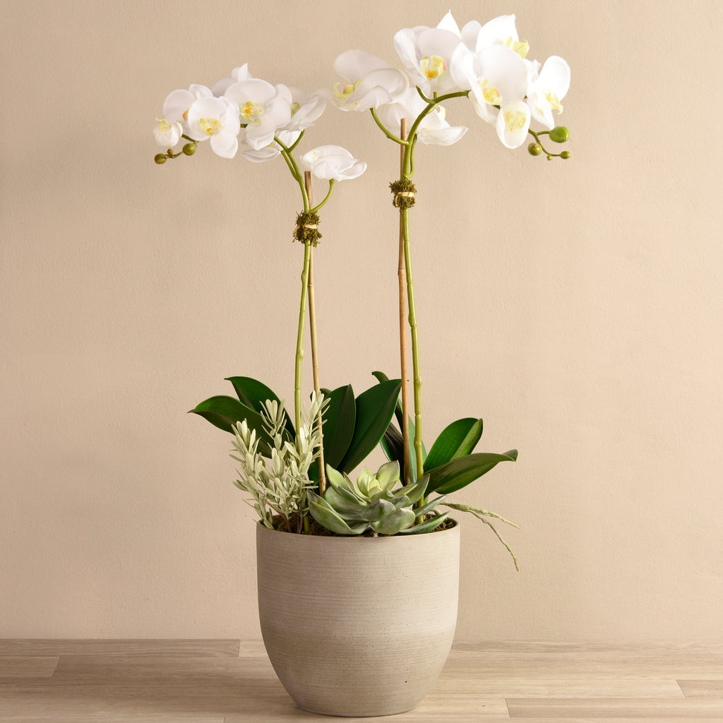 Bloomr Flowers Medium / White Hamptons Orchid & Succulent Arrangement artificial flowers artificial trees artificial plants faux florals