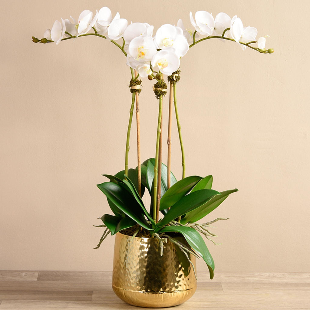 Bloomr Flowers Medium / White Parisian Orchid Arrangement artificial flowers artificial trees artificial plants faux florals