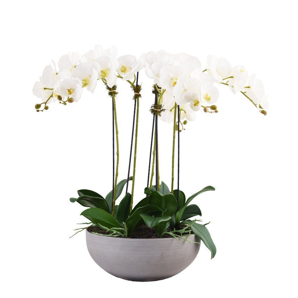 Bloomr Flowers Medium / White Sleek Orchid Arrangement artificial flowers artificial trees artificial plants faux florals