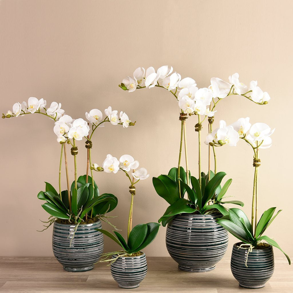 Artificial Coastal Orchid Arrangement, Faux Coastal Orchid Arrangement, Fake Coastal Orchid Arrangement  - Bloomr