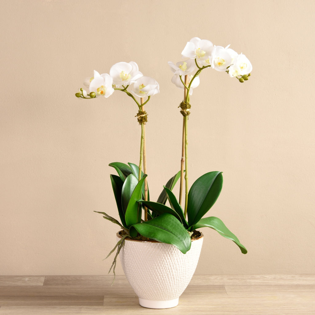 Bloomr Flowers Small / Brown Ceramic / White Rustic Orchid Arrangement artificial flowers artificial trees artificial plants faux florals