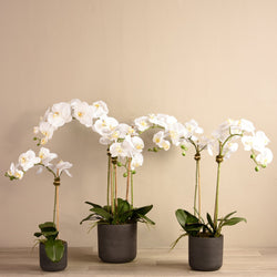 Desert Orchid Arrangement