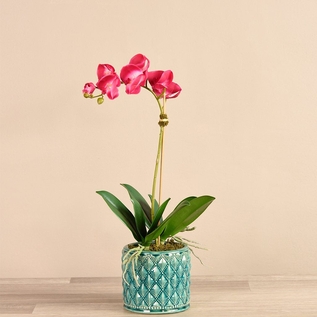 Bloomr Flowers Small Harlequin Orchid Arrangement artificial flowers artificial trees artificial plants faux florals