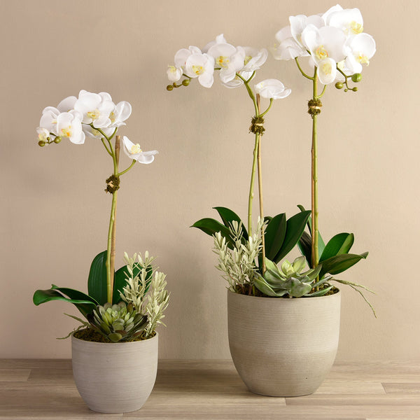 Bloomr Flowers Small / White Hamptons Orchid & Succulent Arrangement artificial flowers artificial trees artificial plants faux florals