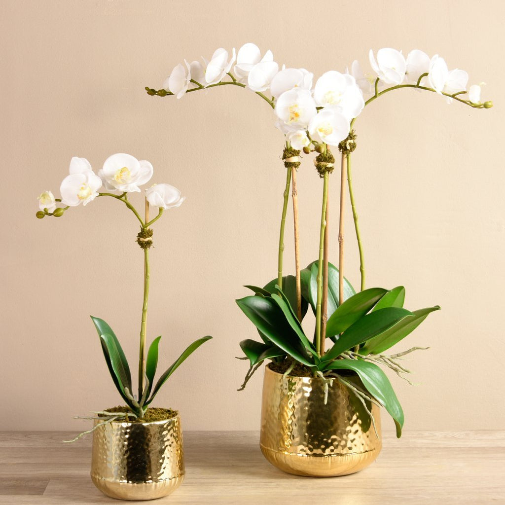 Bloomr Flowers Small / White Parisian Orchid Arrangement artificial flowers artificial trees artificial plants faux florals