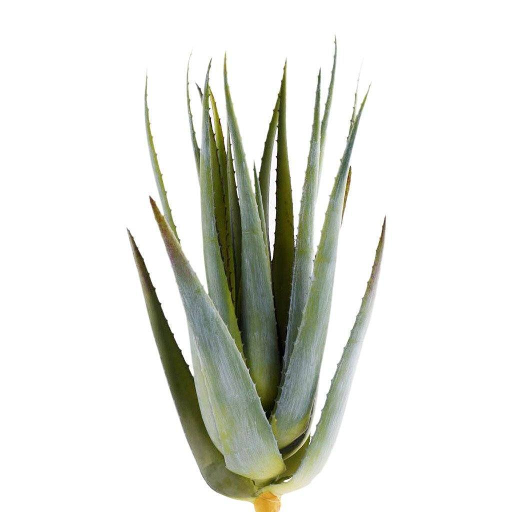 Artificial Aloe Leaves, Faux Aloe Leaves, Fake Aloe Leaves  - Bloomr