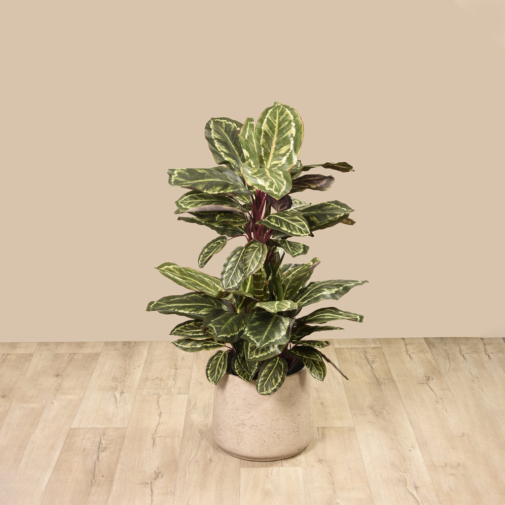 Bloomr Greenery Maranta Plant artificial flowers artificial trees artificial plants faux florals