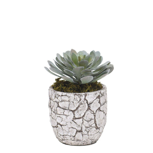 Bloomr Greenery Mini Potted Succulent artificial flowers artificial trees artificial plants faux florals