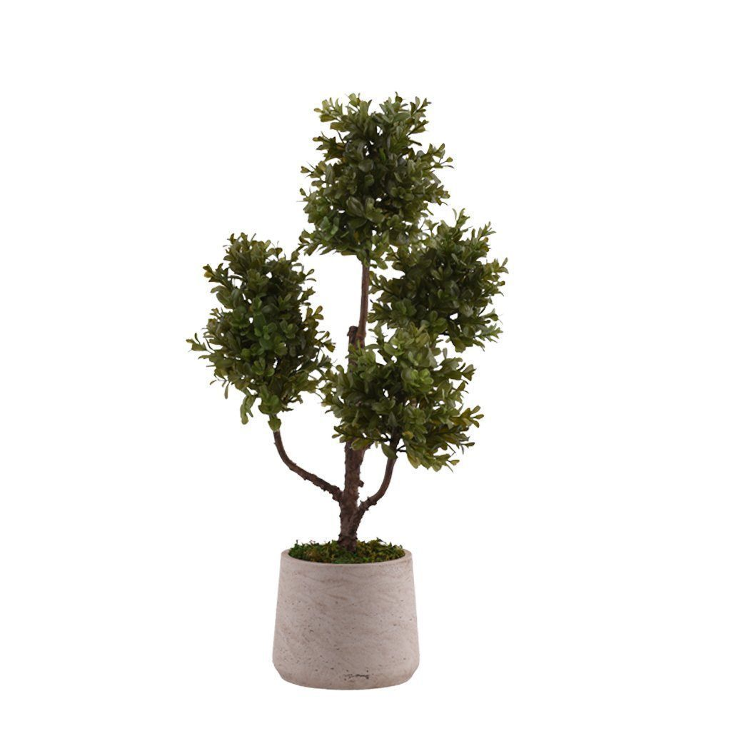 Bloomr Greenery Small Potted Boxwood Plant artificial flowers artificial trees artificial plants faux florals