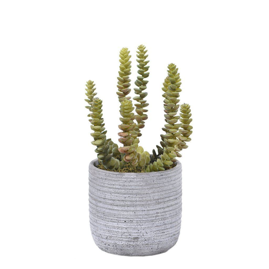 Bloomr Greenery Small Potted Tall Succulent artificial flowers artificial trees artificial plants faux florals