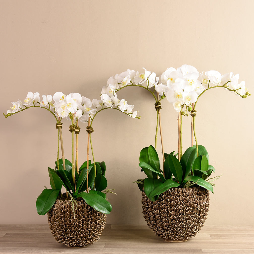 Bloomr Medium Shell Orchid Brown artificial flowers artificial trees artificial plants faux florals