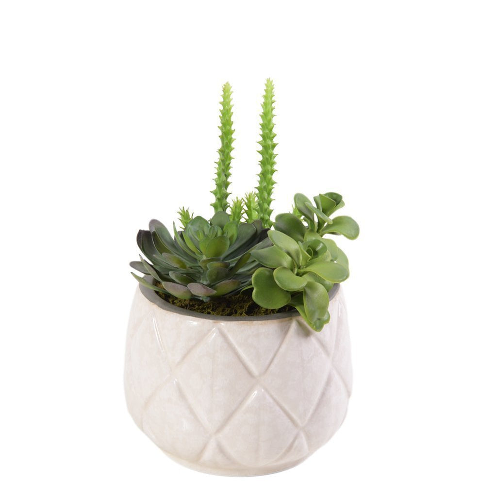 Bloomr Plants Small Palm Springs Succulent Arrangement artificial flowers artificial trees artificial plants faux florals