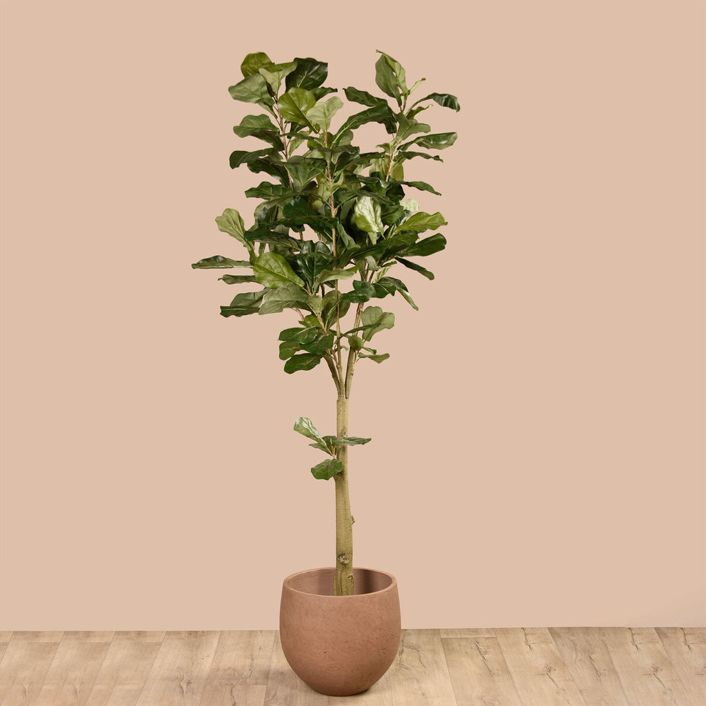Bloomr Trees Potted Fiddle Tree artificial flowers artificial trees artificial plants faux florals