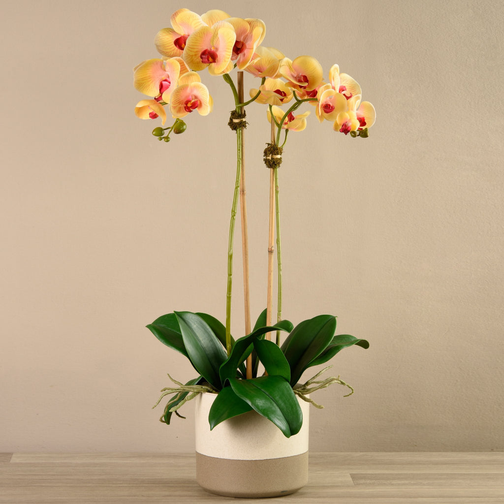 Bloomr-USA Flowers Large Orchid Arrangement in Ceramic Vase artificial flowers artificial trees artificial plants faux florals
