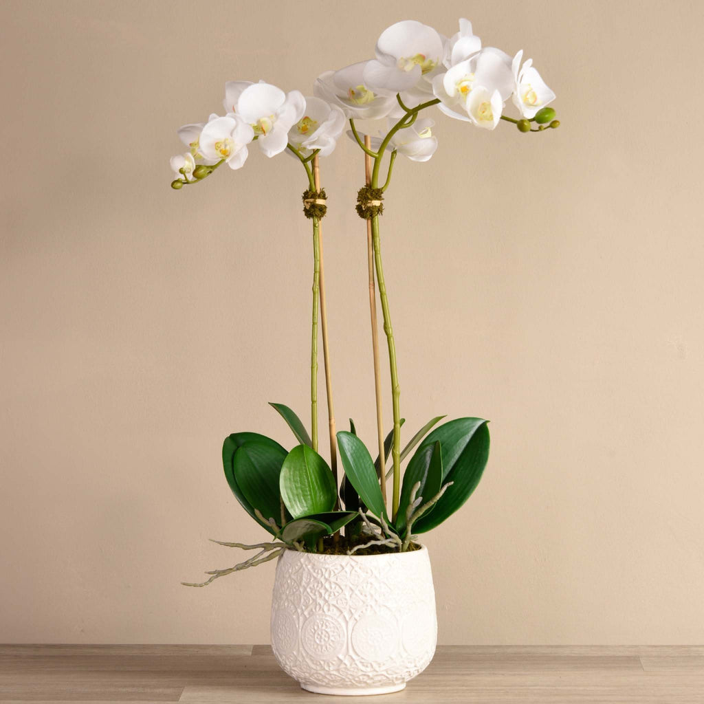 bloomr-usa Flowers Large / White Marrakech Orchid Arrangement artificial flowers artificial trees artificial plants faux florals