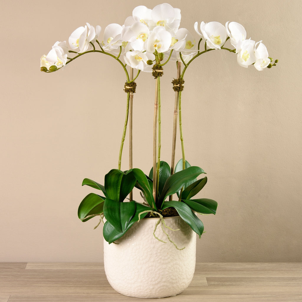 Bloomr-USA Flowers Large / White Orchid Arrangement in Ceramic Vase artificial flowers artificial trees artificial plants faux florals