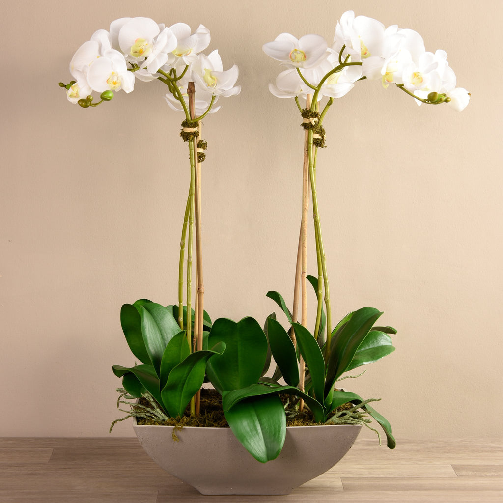 Bloomr-USA Flowers Large / White Orchid Arrangement artificial flowers artificial trees artificial plants faux florals