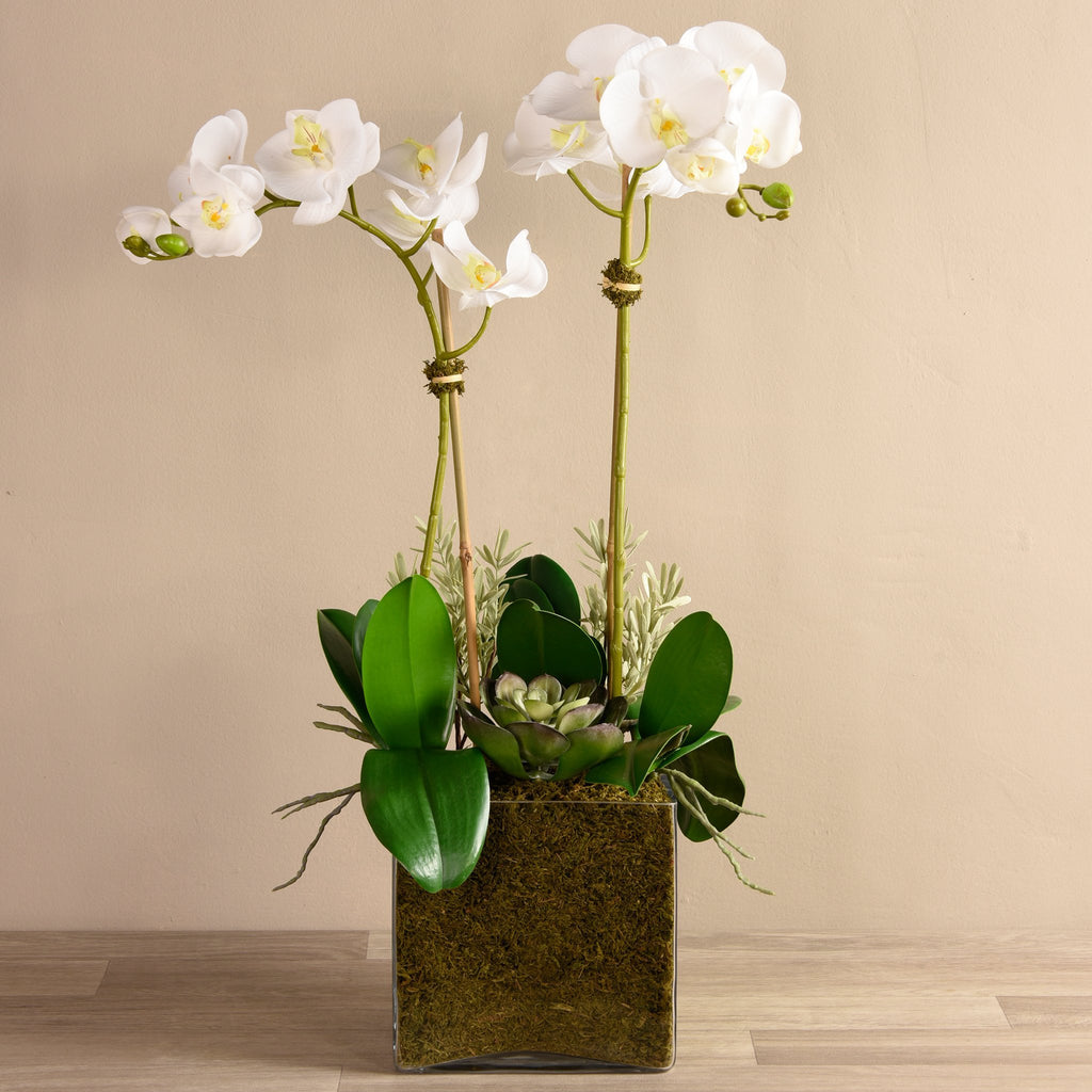 bloomr-usa Flowers Large / White Orchid & Succulent Arrangement (Square Vase) artificial flowers artificial trees artificial plants faux florals