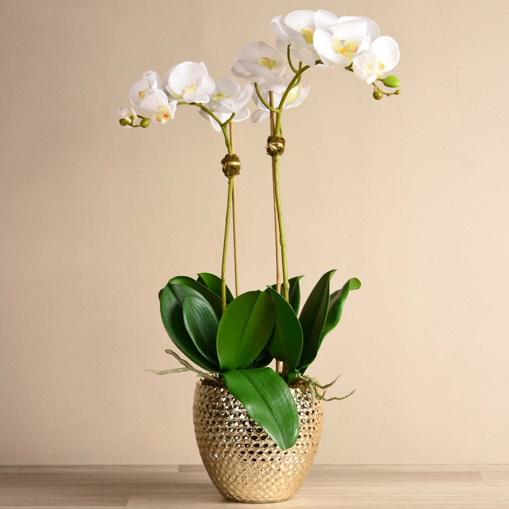 bloomr-usa Flowers Large / White Paradise Orchid Arrangement artificial flowers artificial trees artificial plants faux florals