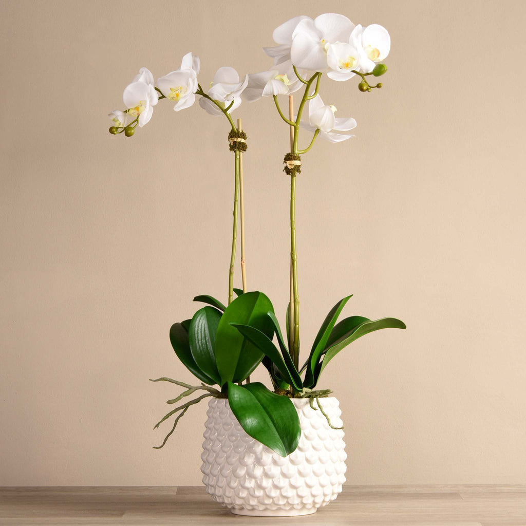 bloomr-usa Flowers Large / White Pearl Orchid Arrangement artificial flowers artificial trees artificial plants faux florals
