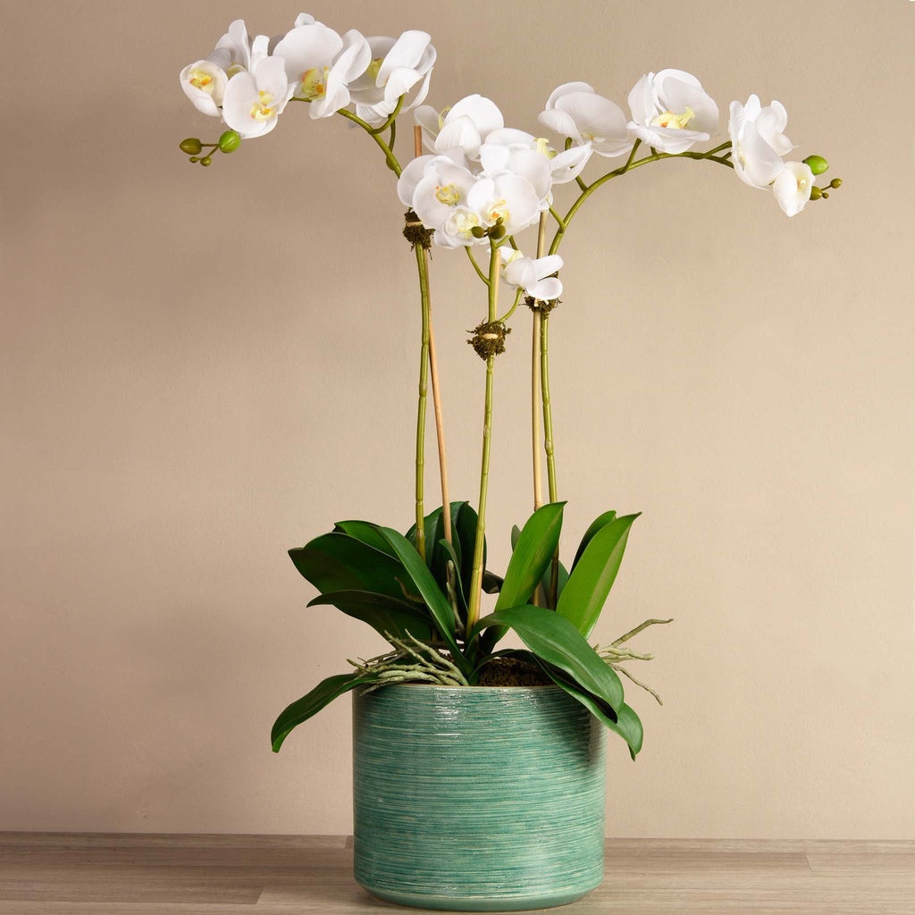 bloomr-usa Flowers Large / White Placid Orchid Arrangement artificial flowers artificial trees artificial plants faux florals
