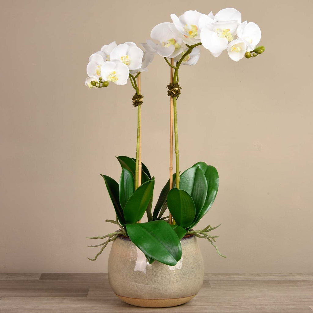 bloomr-usa Flowers Large / White Santa Fe Orchid Arrangement artificial flowers artificial trees artificial plants faux florals