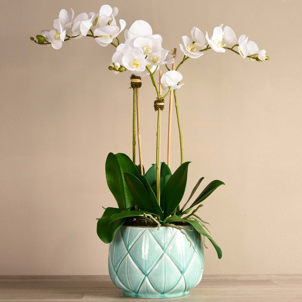 bloomr-usa Flowers Large / White Stella Orchid Arrangement artificial flowers artificial trees artificial plants faux florals
