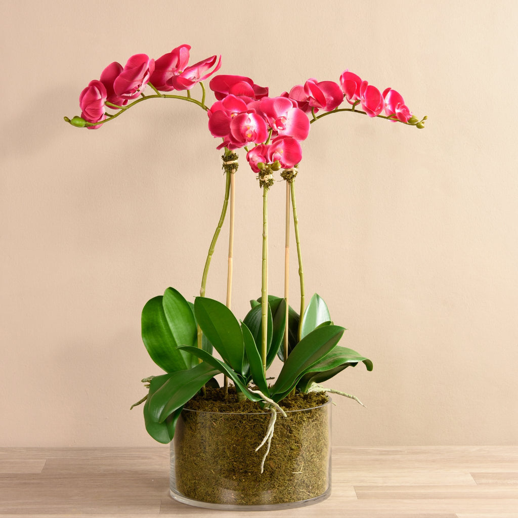 Bloomr-USA Flowers Mangeta Orchid Arrangement in Glass Vase artificial flowers artificial trees artificial plants faux florals