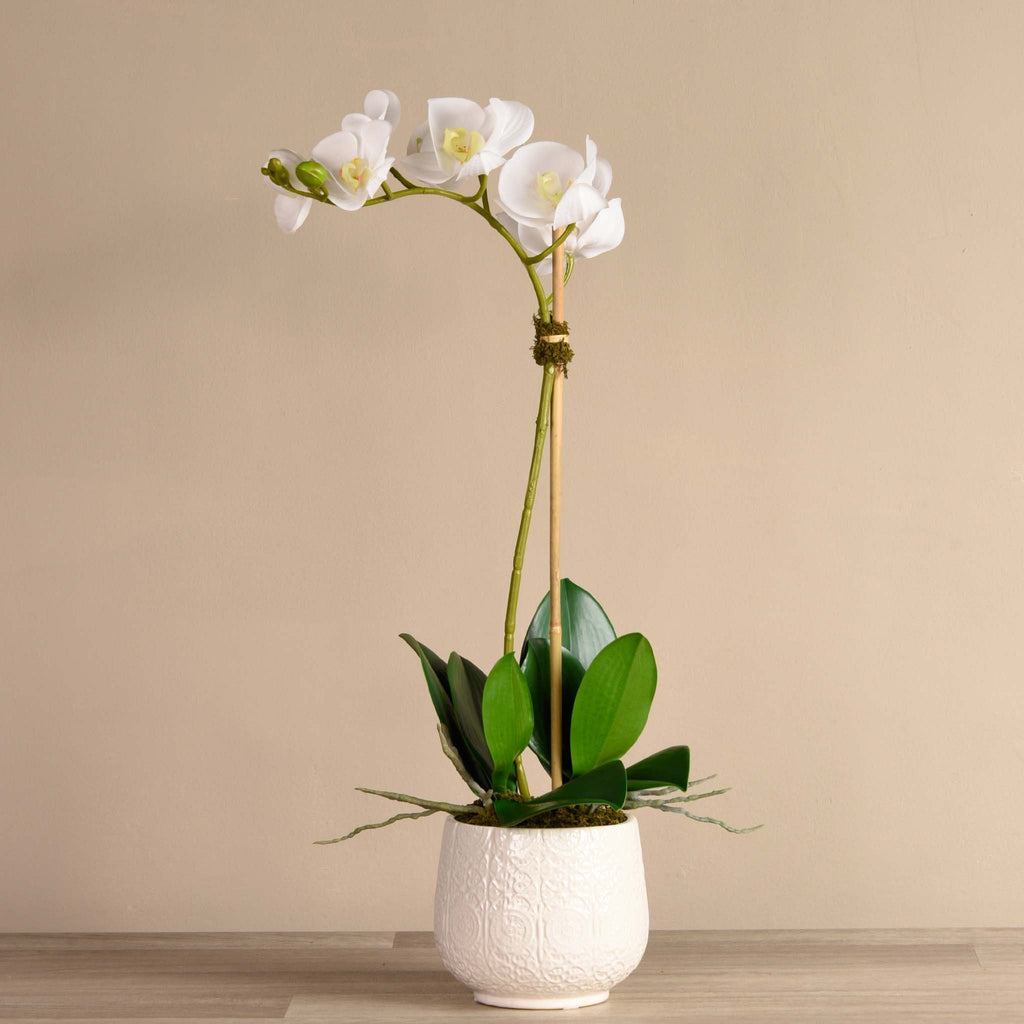 bloomr-usa Flowers Mediium / White Marrakech Orchid Arrangement artificial flowers artificial trees artificial plants faux florals
